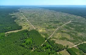 amazon rainforest deforestation. Wonderful Rainforest New Study Shows That McDonaldu0027s Soy Policies Have Helped Slow Amazon  Rainforest Deforestation In Brazil  On Rainforest Deforestation O
