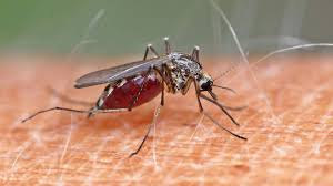 Schutz Vor Stichen Was Wirklich Gegen Stechmücken Hilft Sternde