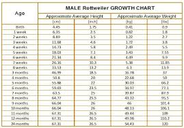 Dog Food Chart By Weight And Age Male Rottweiler Growth Chart Rottweiler Weight Rottweiler