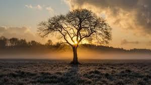 Sunrise in the Trees Wallpaper