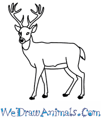 how to draw a deer in 11 easy steps print tutorial