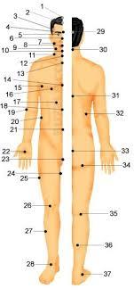 Human Body Pressure Points Body Pressure Points Pressure
