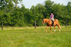 Image result for Is Glucosamine For Horses Effective?