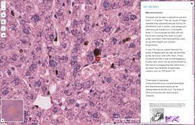 Nyu Langone Virtual Microscope Nyu Langone Health