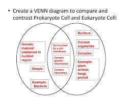 Venn Diagram Comparing Animal And Plant Cells Ppt Cell Structure Review Powerpoint Presentation Id 2344527