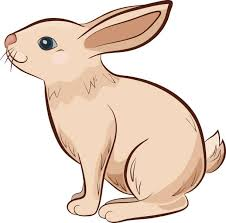 Image result for rabbit clipart