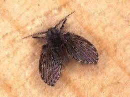 Little Flying Bugs Lowes Vac Drains Sink  House Remodeling Small Flies Around Kitchen Sink