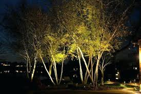lighting outdoor trees. Outdoor Up Lighting For Trees Archives .