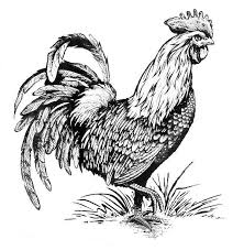 Small Picture Rooster Coloring Page Adult Coloring Pages Pinterest