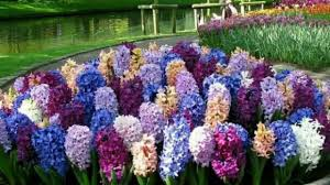 most beautiful flower gardens in the world most beautiful flower you