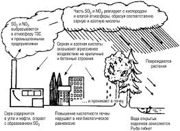 Кислотные дожди проблема кислотных осадков её причины и последствия Образование кислотных дождей и их воздействие на окружающую среду