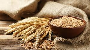 Benefits and side effects of barley. Wheat Health Benefits Side Effects Nutrition Facts Fun Facts And History