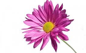 En Couleurs Imprimer Nature Fleurs Num Ro 621733