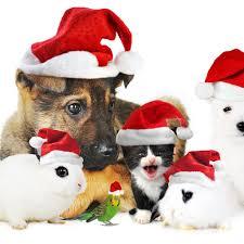 cute animal christmas backgrounds. Fine Animal Christmas Dog IPad Air 2 Wallpapers To Cute Animal Backgrounds