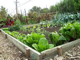 Small Picture How To Start A Vegetable Garden From Scratch Marvelous Decoration