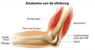 krakende knie meniscus