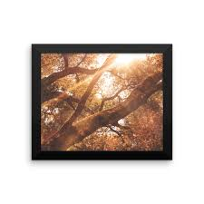framed outdoor photo print nature picture framed wall art nature photography sunlight sunshine wall decor