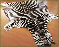 authentic zebra skin rug home design ideas in real remodel 3