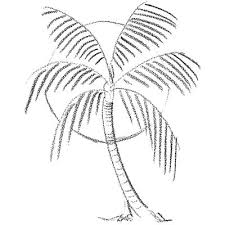 e11549796739a06145047ffe2169bd34 sun drawing drawing trees best 25 how to paint palm trees ideas on pinterest palm tree on house plants palm tree questions