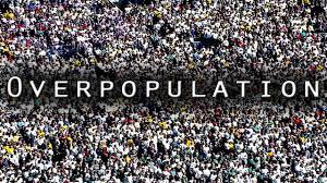 essay iii reflection zhe s site university of illinois at  overpopulation image