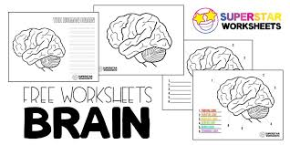 These activities and resources are effective and simples ways to explain growth mindset to kids. Human Brain Worksheets Superstar Worksheets