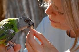 Parrot Diet Chart Healthy Parrot Diet And Toxic Foods Best Friends Animal