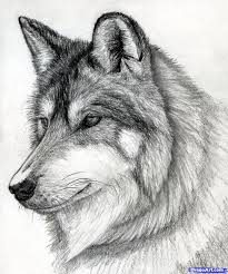 wolf howling drawing head. Contemporary Head How To Draw A Wolf Head Mexican Step 15  Drawing Ideas Pinterest  Drawings Animal Drawings And Art On Wolf Howling Head