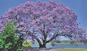 ağaç resimleri ile ilgili görsel sonucu