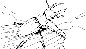 insect coloring pages preschool unique free printable in snazzy page