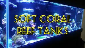 Saltwater Aquarium Lighting Guide Soft Coral Tank Beginner Guide To Saltwater Aquariums