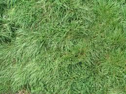 tall grass texture. Repetitive Plants Textures Tall Grass Texture
