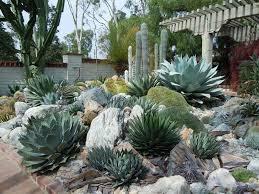 garden design best 25 outdoor cactus garden ideas on succulent rock with regard