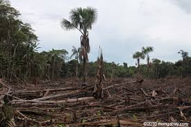 amazon rainforest deforestation.  Rainforest Small Scale Deforestation In The Colombian Amazon For Rainforest Deforestation Rainforests  Mongabay