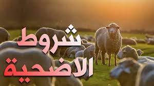 شروط ومواصفات أضحية عيد الأضحى المبارك - الدمبل نيوز