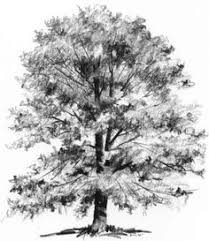 capture the character of a tree drawing nature find this pin and more on how to draw realistic