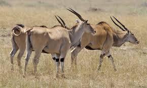 Afrikaanse dierennamen