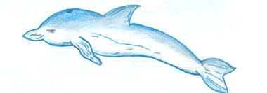 Реферат на тему февраля международныйй день защиты морских  Реферат на тему 19 февраля международныйй день защиты морских млекопитающих Реферат