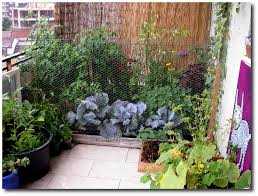 Small Picture Balcony Growing Gardening Tips for the Backyardless