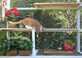 a picure of an orange and white cat representing a cat in a catio
