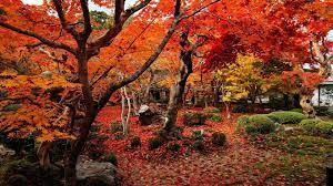 1920x1080, Download Autumn Wallpaper ...