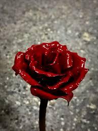 Resultado de imagen de rosas pequeñas