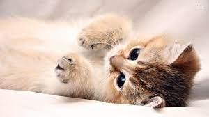 Baby Kitten Wallpapers - Top Free Baby ...