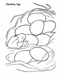 Small Picture Coloring Pages Chickens Beautiful Chicken Egg Coloring Page Photo