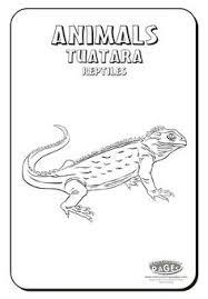 Small Picture tuatara New Zealand International Thinking day Ideas I can use