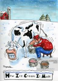 Image result for cow cartoons images