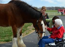 clydesdales gift of a day