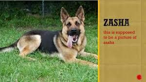 zasha