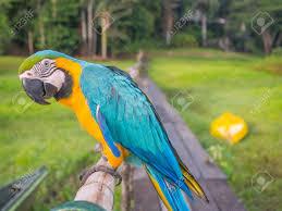 Bildergebnis für beautiful amazon images