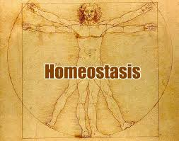 Why Homeostasis Is Important? | Examples of Homeostasis
