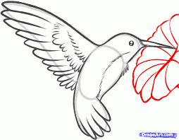 hummingbirds and flowers drawing. Exellent Hummingbirds How To Draw A Hummingbird And Flower Step By Step Birds Animals  In Hummingbirds And Flowers Drawing R